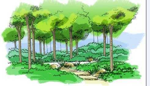 公园局部手绘图