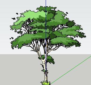 园林植物2d树木SketchUp模型图