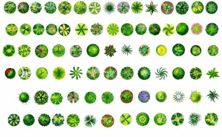 植物图例平面图标