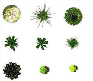 灌木乔木,草坪花卉等ps平面图