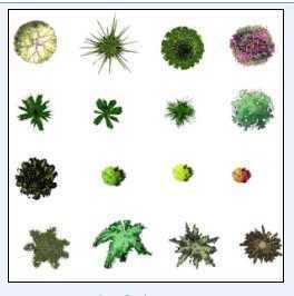 灌木乔木,草坪花卉等等的ps平面图图片