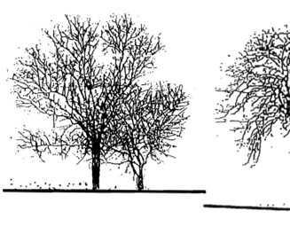psd格式立面树配景免费下载 - 园林景观素材 - 土木