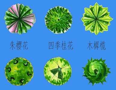 植物平面素材免费下载 - 园林景观素材 - 土木工程网
