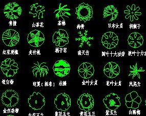 CAD园林树木图库