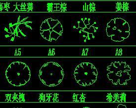 CAD棕榈灌木植物图例