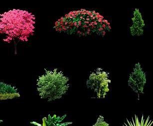 24种园林植物PSD形意素材
