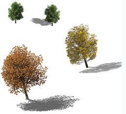 4种树木鸟瞰PSD素材源文件
