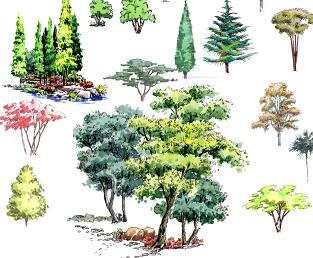 30种手绘树木立面PSD素材源文件