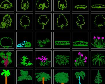 205种园林景观植物CAD图库