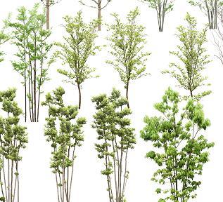 21个绿化植物PSD素材源文件