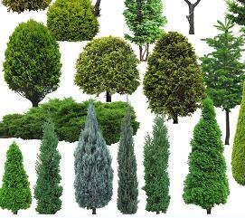 18种园林植物PSD素材源文件