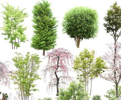 18种景观植物树木PSD素材